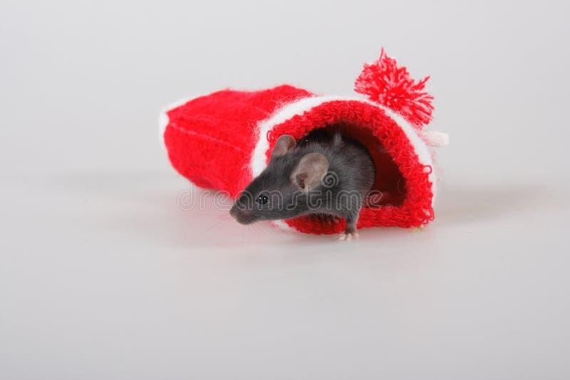 Petite souris de Noël photographie stock libre de droits