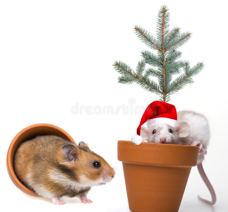 Petite souris mignonne avec le chapeau de Santa et le hamster drôle photos libres de droits
