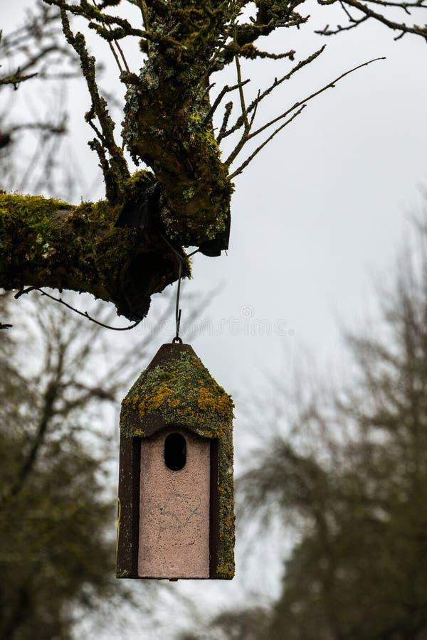 Petite table d'oiseau sur un vieil arbre moussu photos stock
