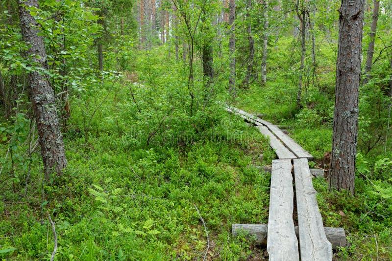 Petite traînée de caillebotis dans le paysage finlandais de forêt photo libre de droits