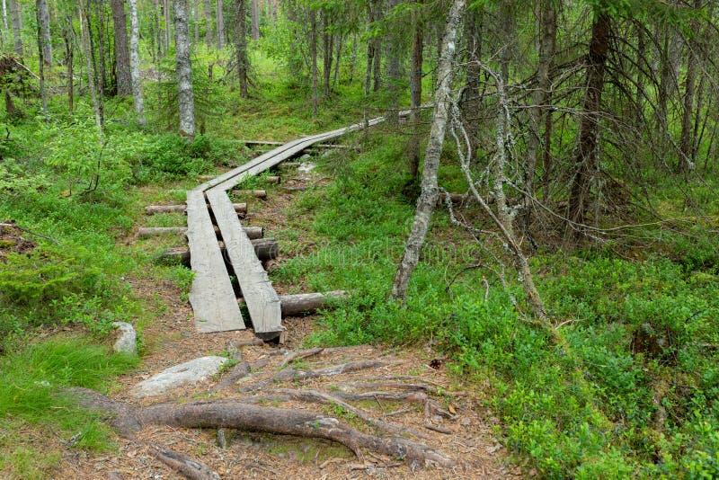 Petite traînée de caillebotis dans le paysage finlandais de forêt photographie stock libre de droits