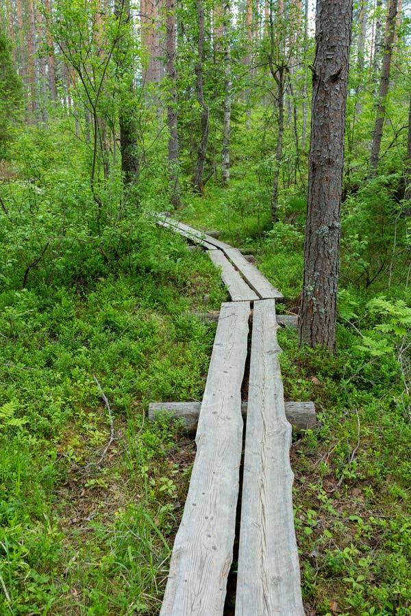 Petite traînée de caillebotis dans le paysage finlandais de forêt image libre de droits
