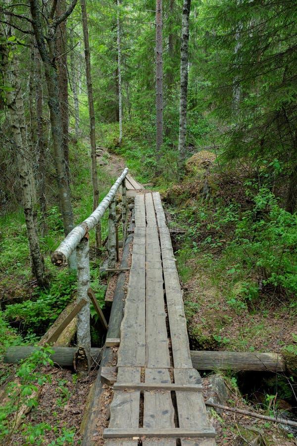 Petite traînée de caillebotis dans le paysage finlandais de forêt image stock