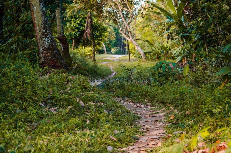 Petite traînée de la saleté parmi les arbres et la végétation verte images libres de droits