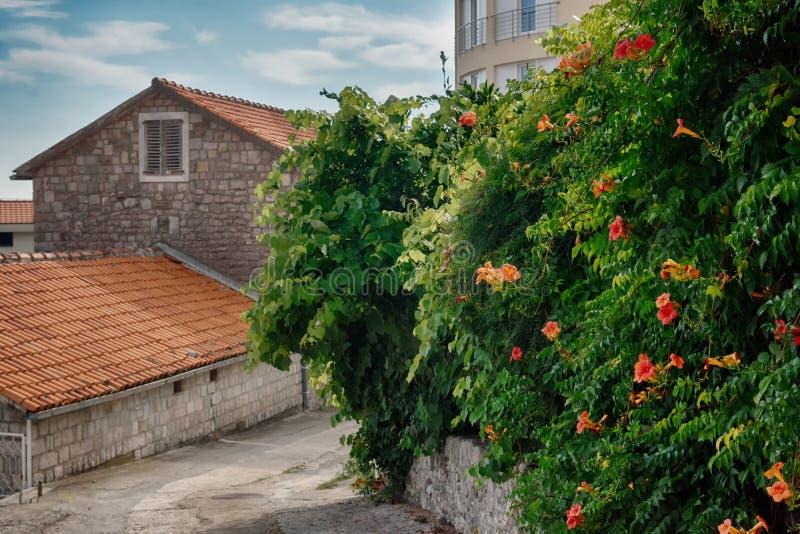 Petite ville européenne de belle rue Une petite ville près de la mer Méditerranée Mur en pierre, jardin vert avec des fleurs image libre de droits