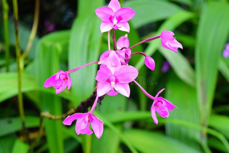 Petite Violet Lavender Flowers Hanging Upside vers le bas avec les tonalités blanches avec le fond vert - papier peint floral images stock