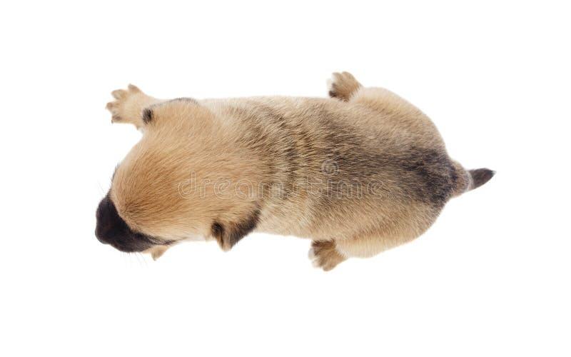 Petite vue de chien d'en haut images stock