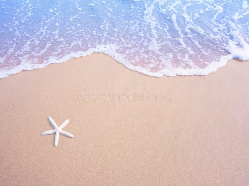 Petites étoiles de mer blanches sur le sable et la vague d'eau en pastel, effet de filtre de cru photographie stock libre de droits