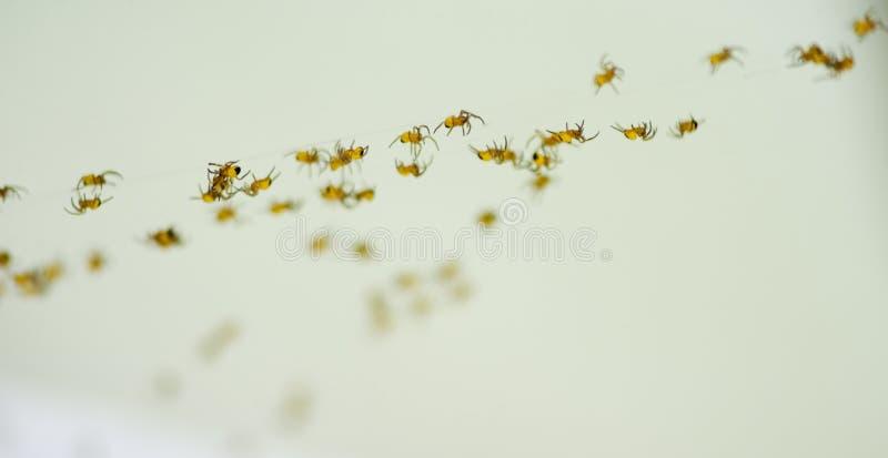 Petites araignées photo stock