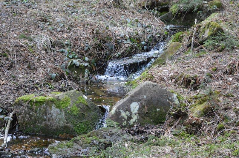 Petites cascades pures dans la forêt profonde photo libre de droits