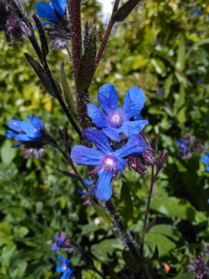 Petites choses bleues pourpres douces images stock