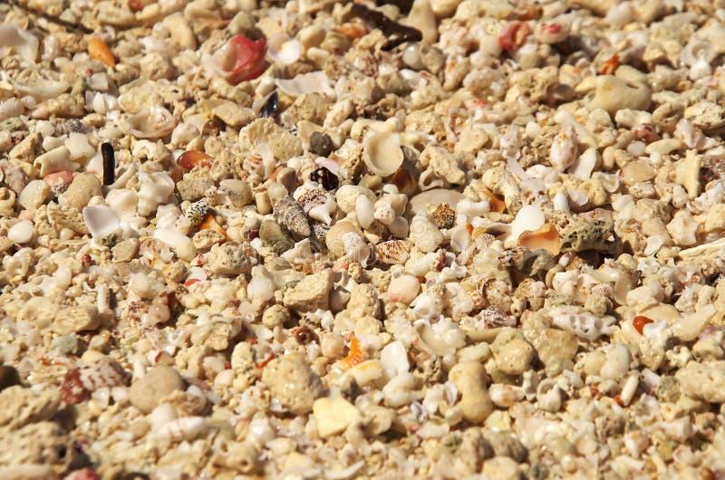 Petites coquilles dispersées partout dans une plage tropicale photographie stock libre de droits