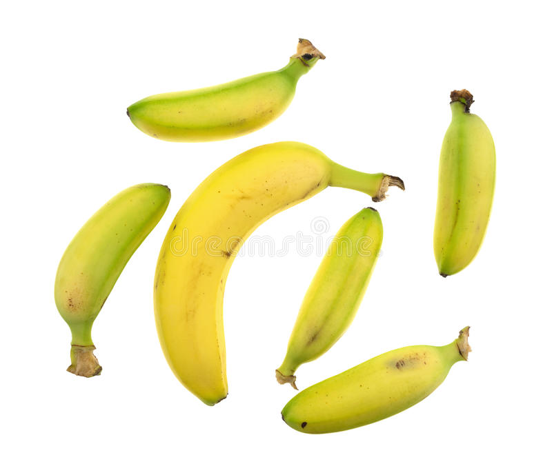 Petites et grandes bananes sur un fond blanc images stock