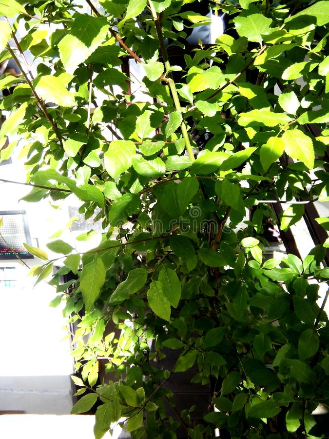 Petites feuilles photo libre de droits