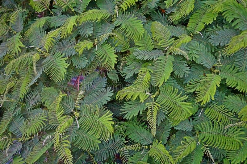 Petites feuilles vertes éclaboussant partout autour photos libres de droits