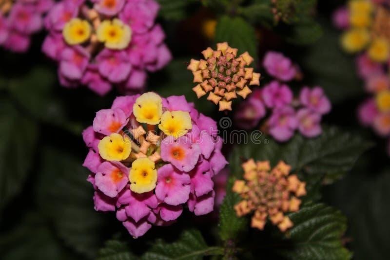 Petites fleurs images libres de droits