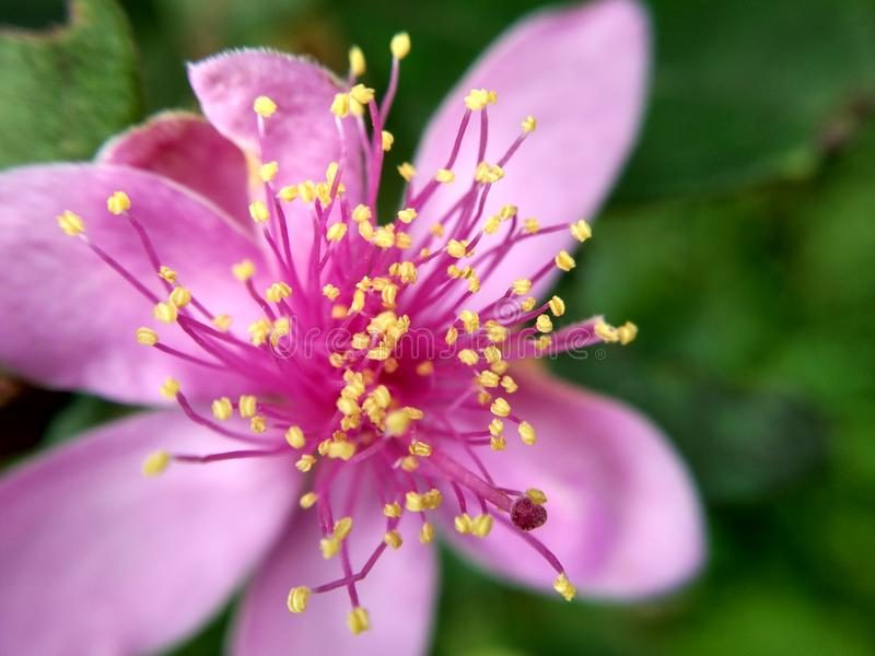 Petites fleurs image stock