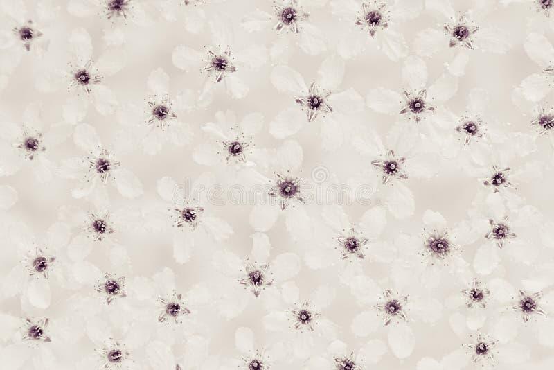 Petites fleurs blanches sur l'eau dessus Noir et blanc, sépia Configuration florale Mariage, fond de ressort Macro image stock