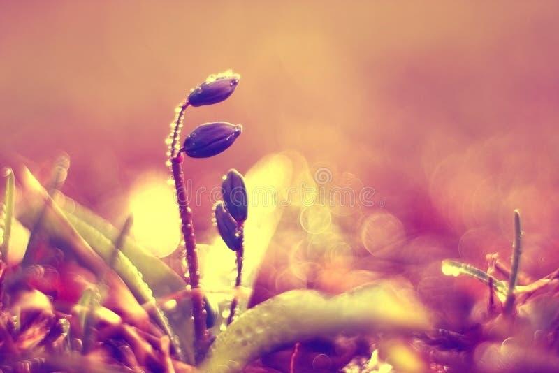 Petites fleurs bleues de ressort image stock