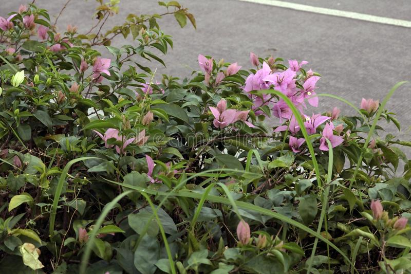 Petites fleurs pourprées image stock