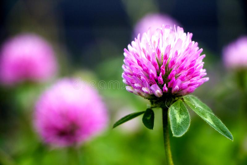 Petites fleurs roses photo stock