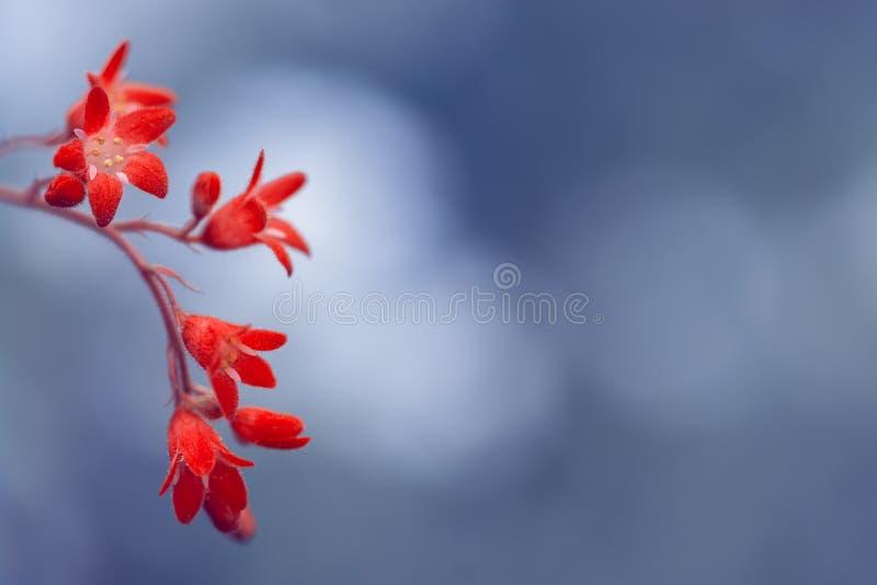 Petites fleurs rouges sur le fond bleu avec le bokeh Image artistique avec l'espace pour le texte images libres de droits
