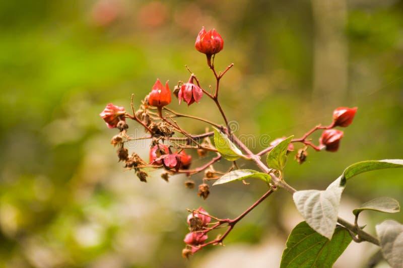 Petites fleurs sauvages photographie stock libre de droits