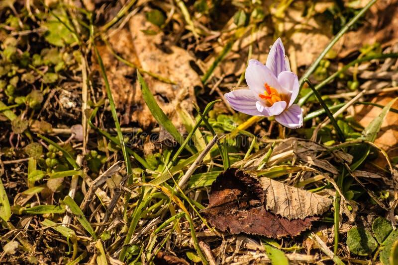 Petites fleurs sauvages photo libre de droits