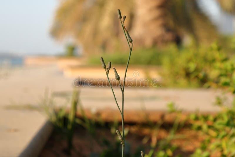 Petites fleurs sur une branche photo stock