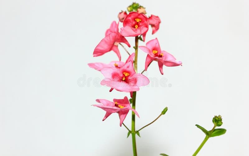 Petites fleurs tropicales roses images libres de droits