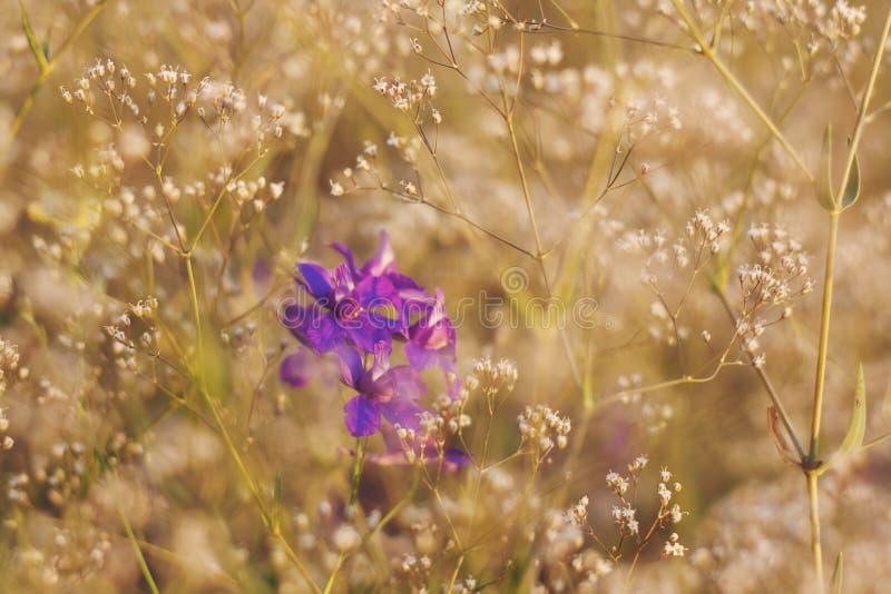 Petites fleurs violettes dans le jardin à l'été photo libre de droits