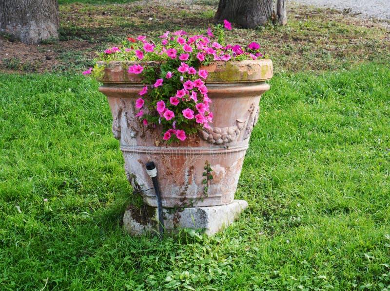 Petites fleurs violettes dans le pot et des feuilles vertes, beau fond naturel romantique photos libres de droits