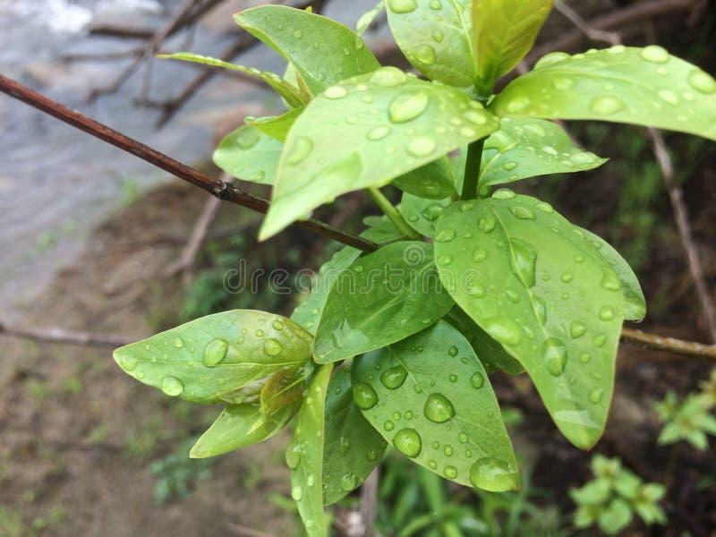 Petites gouttes de pluie image libre de droits