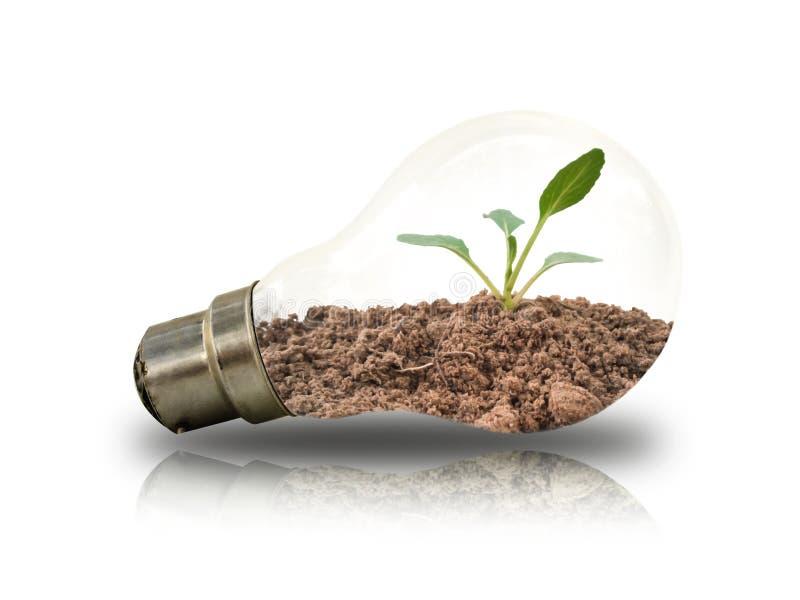 Petites jeunes plantes dans les ampoules sur un fond blanc illustration stock