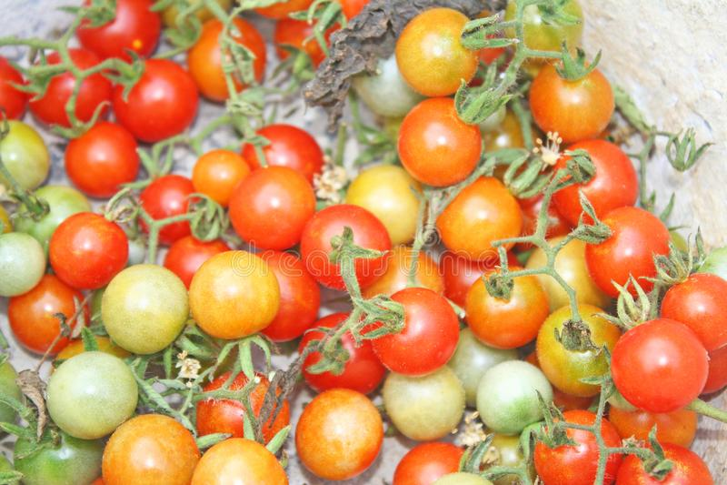 Petites tomates fraîches photographie stock
