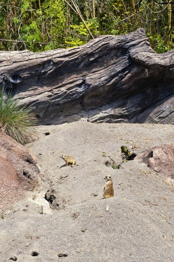 Petits animaux de zoo photographie stock