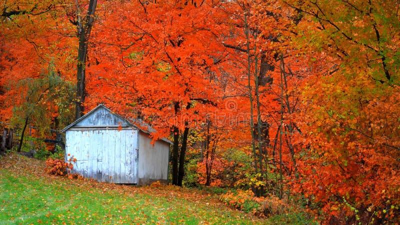 Petits arbres abandonnés de grange et d'automne photos stock