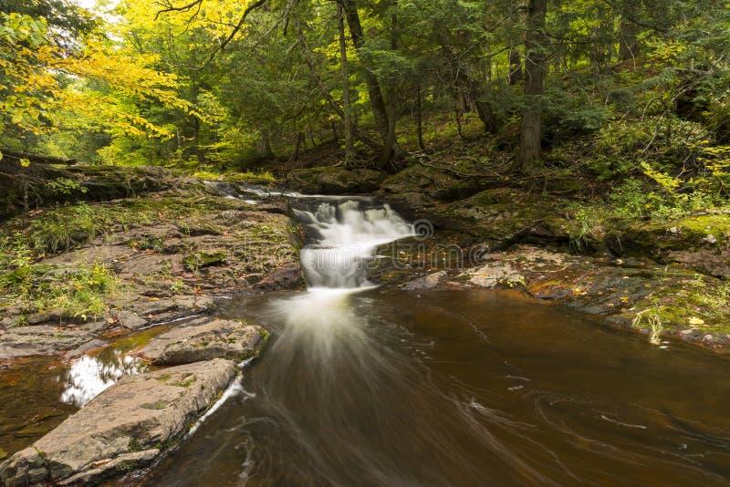 Petits automnes de fleuve de carpe photographie stock