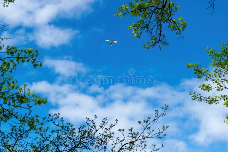 Petits avions, jet privé, voyageant à travers un beau ciel bleu un jour ensoleillé, avec des feuilles et des branches d'arbre dan image stock