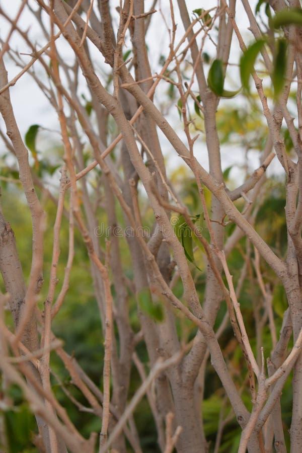 Petits brances et feuilles d'arbre d'usine photos libres de droits