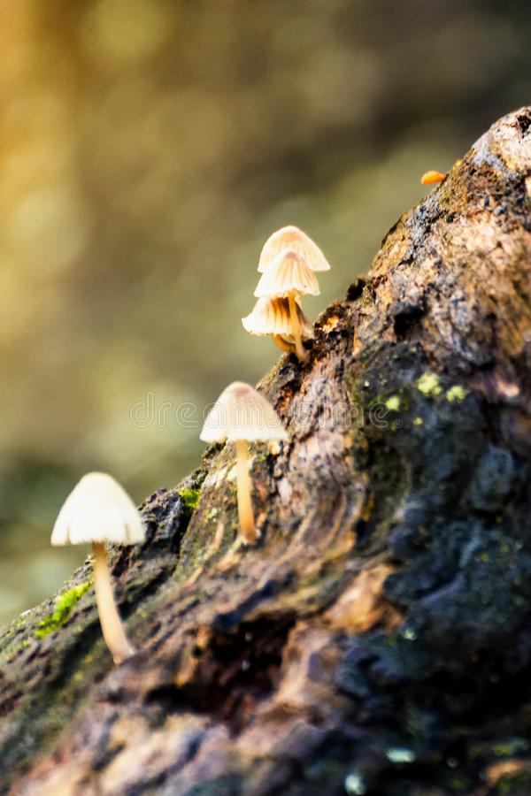 Petits champignons s'élevant sur un arbre photo libre de droits