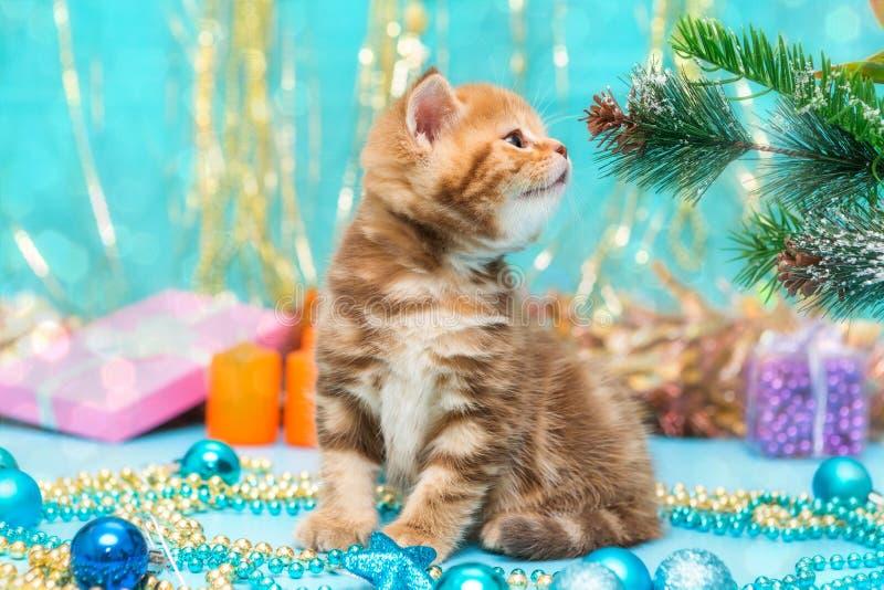 Petits chaton et décorations britanniques de Noël image libre de droits