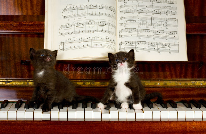 Petits chatons photos stock