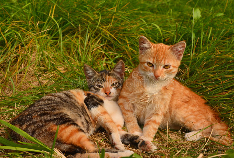 Download Petits chatons image stock. Image du animaux, chatons - 77159417
