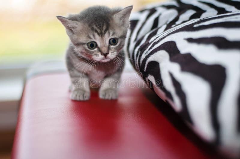 Petits chatons gentils photo libre de droits