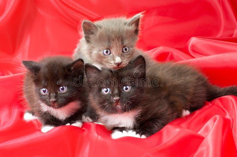 Petits chatons pelucheux image stock