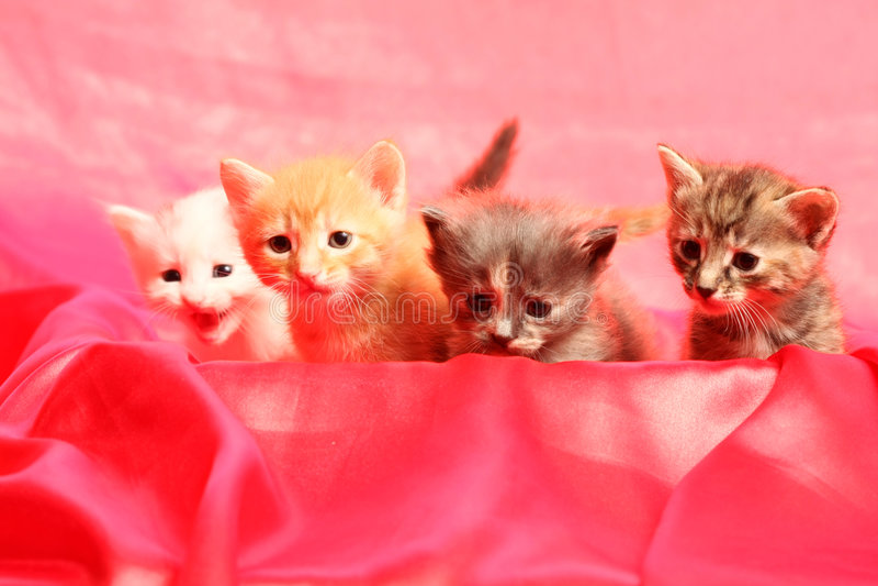 Petits chatons sur le rouge photo stock
