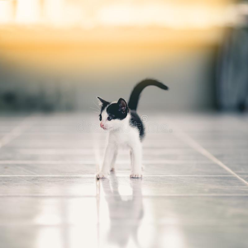 Petits chatons tigrés mignons photo libre de droits