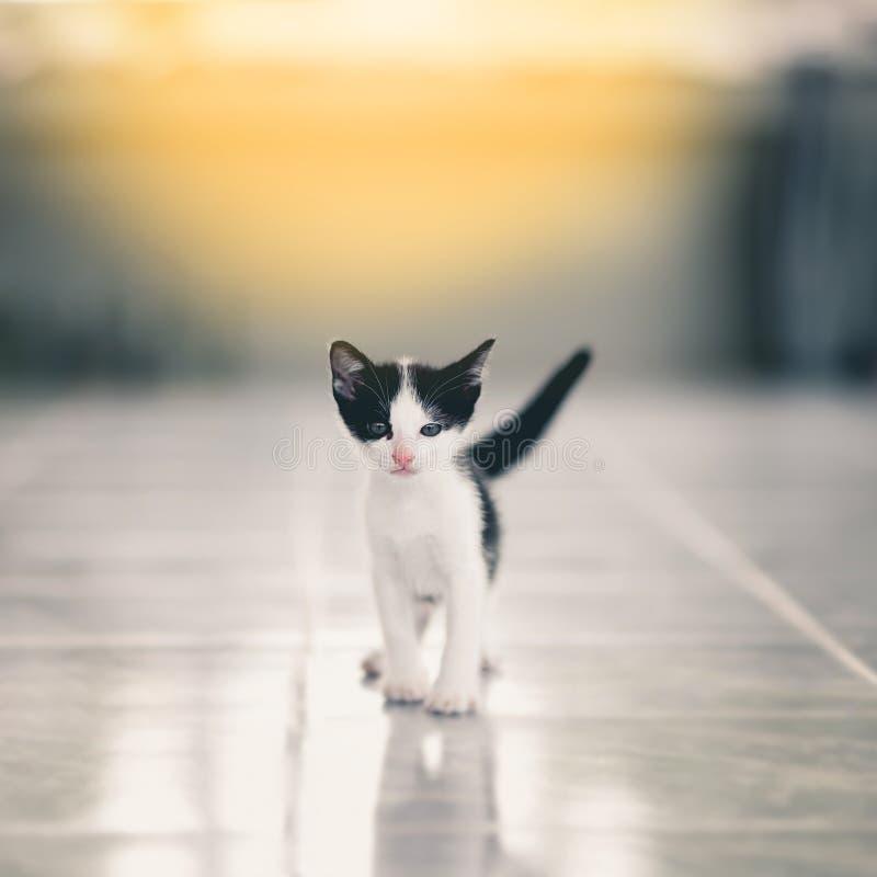 Petits chatons tigrés mignons images libres de droits