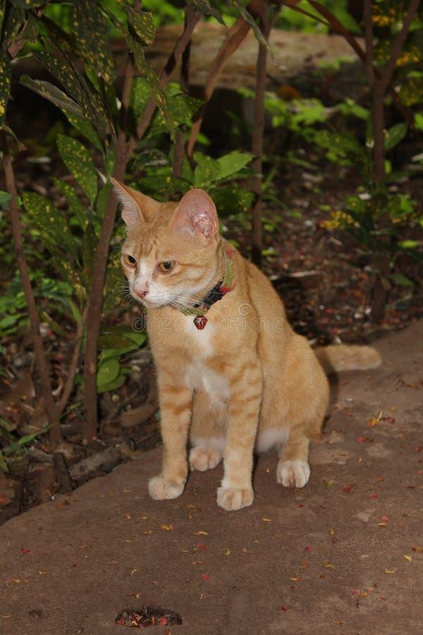 Petits chats de tigre mignons image libre de droits